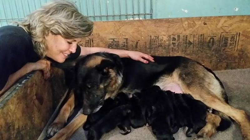 Both mommies resting with babies