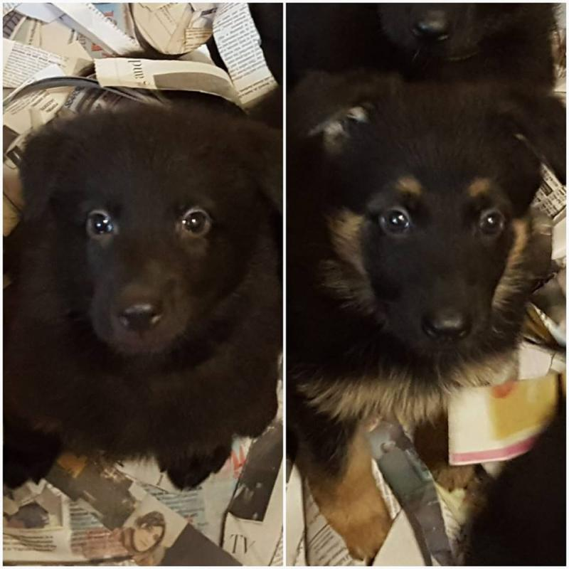 Here is two sweet little girls available