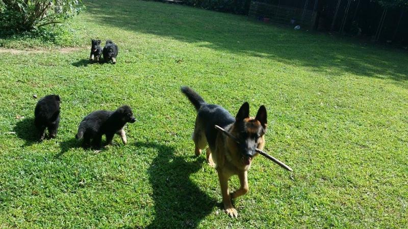 Dad with his babies