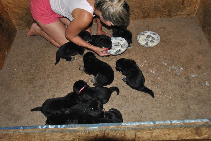 It didn't take much to get them to eat :)