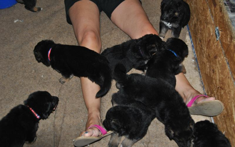 After play time they all passed out
