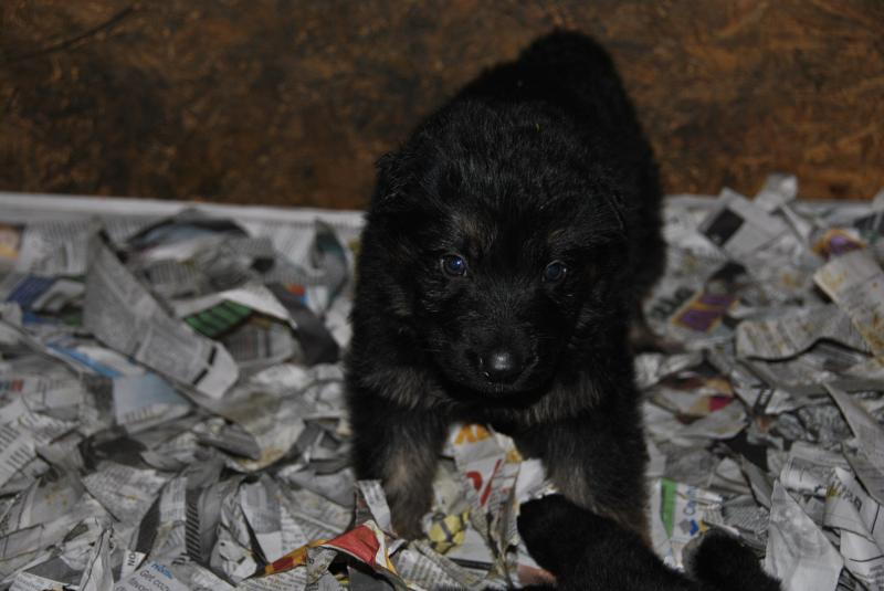 Just handsome