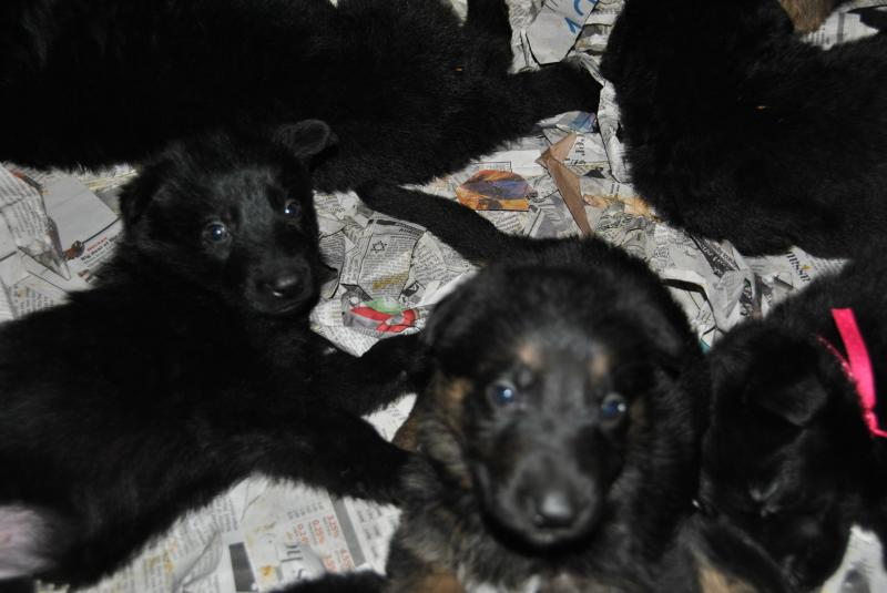 Black male to the left