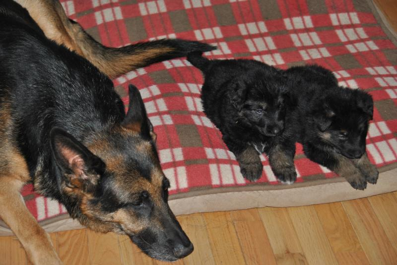 Sheeba is an awesome trainer