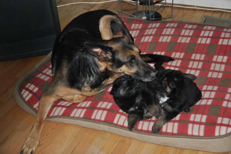 Sheeba loves her grand babies!