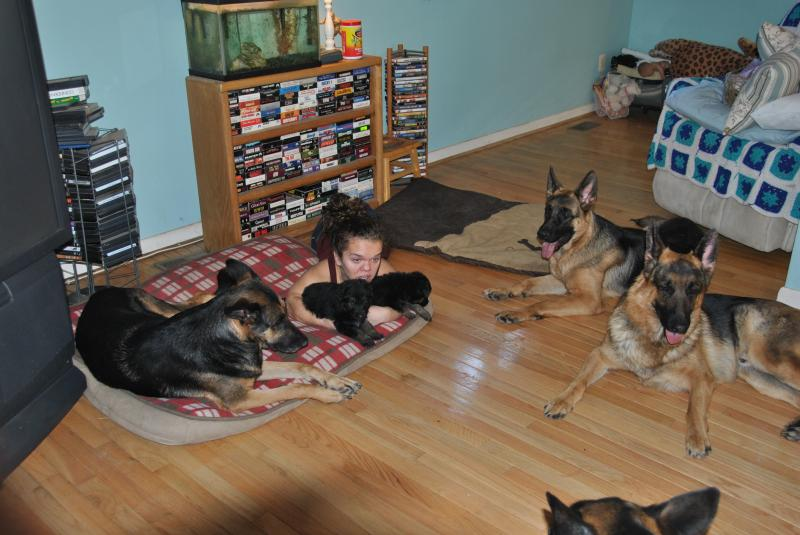 All my dogs love these babies