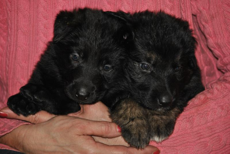 two lil beauties