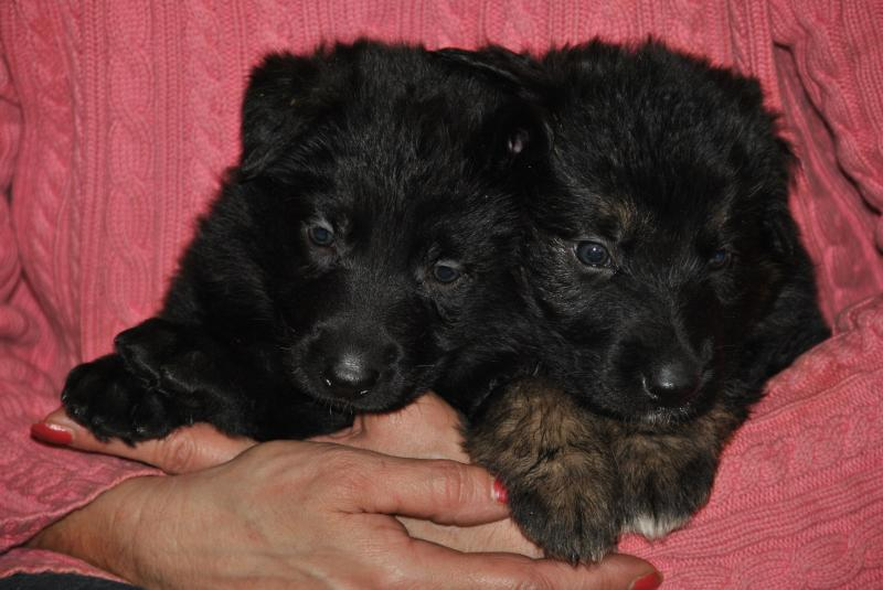 two little loves