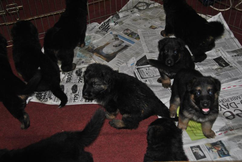 They watch me like a hulk even at this age