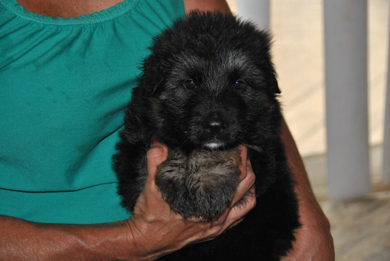 another handsome male