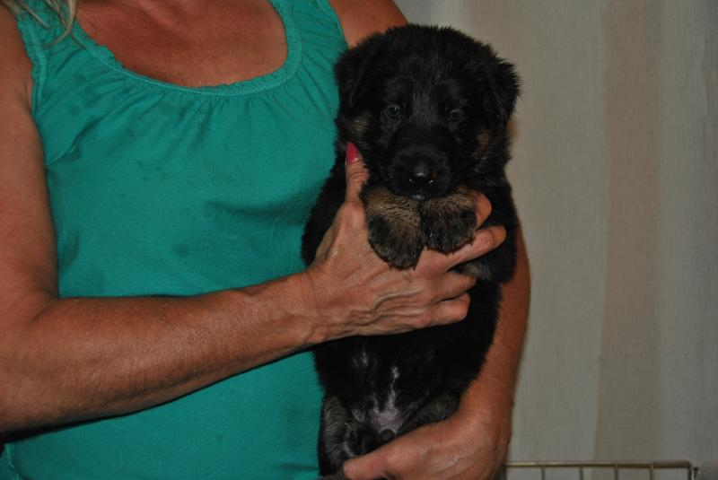 a beautiful female