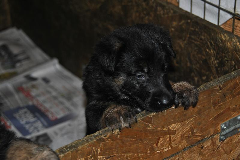 another beautiful female