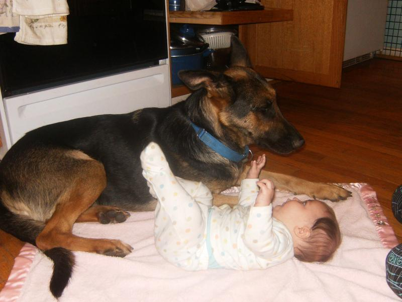 Sheeba always takes care of her babies, even human ones