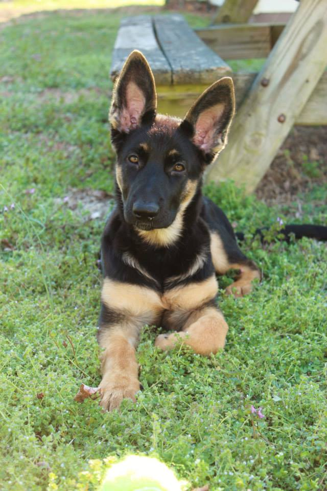 Ace and Nina's puppy at 4 months old