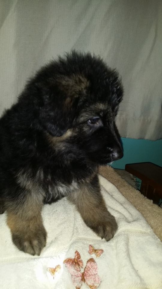 All of these puppies have awesome markings