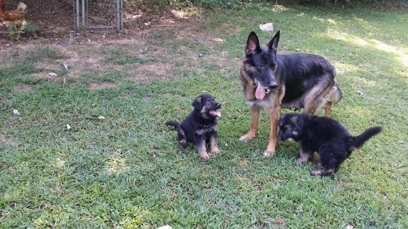 Nina with her puppies