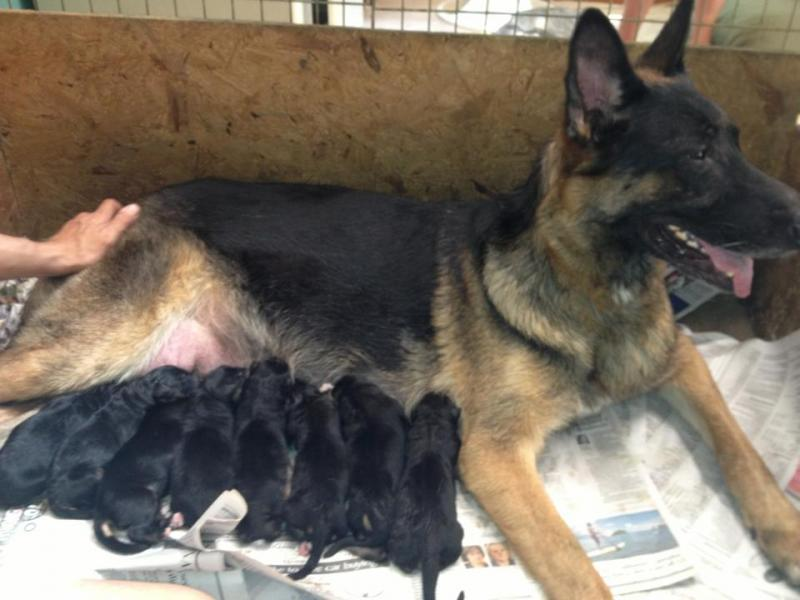 Nina relaxing after a long day of delivering her babies