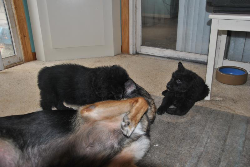 Mom loves to play as long as there isn't all at once