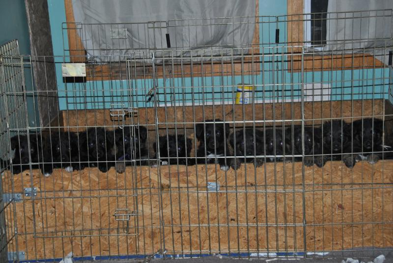 what a way to be greeted!