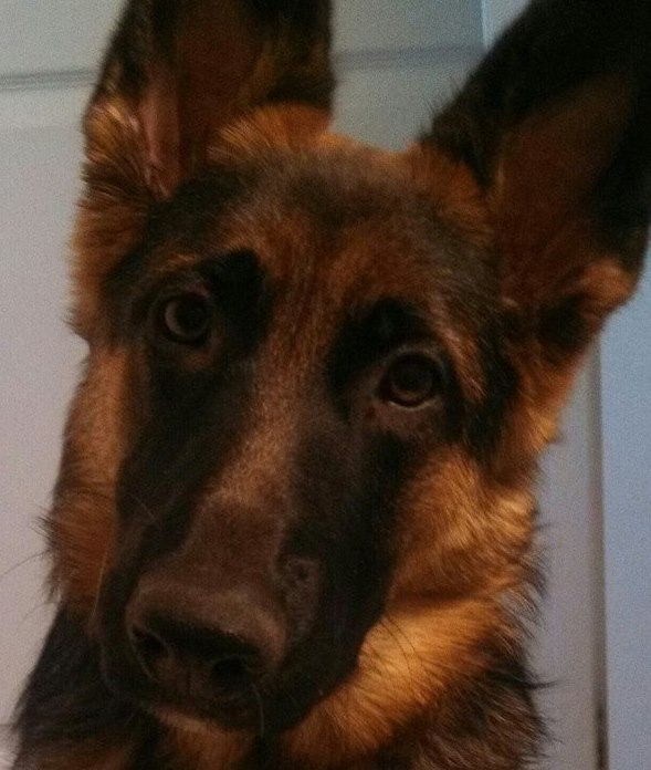 Ace and Nina's daughter 9 months old