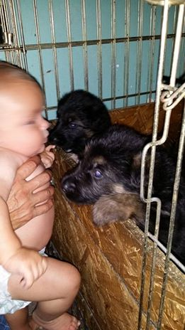My grandson and puppies...priceless