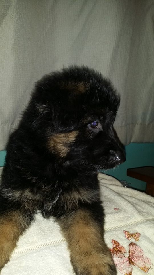 All these males are gorgeous with awesome bone
