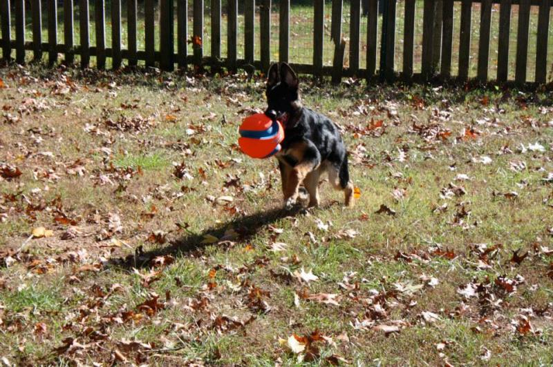 following most of my puppies through facebook