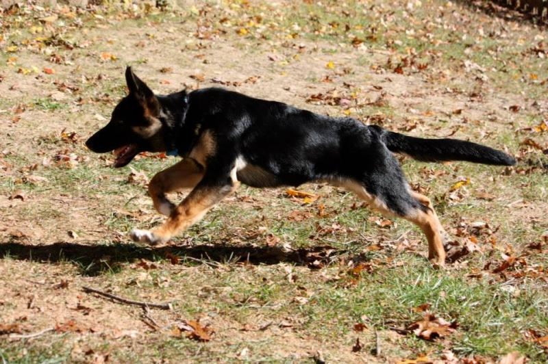 Look at that sprint on him