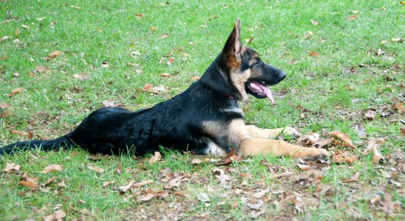 Proud of his yard