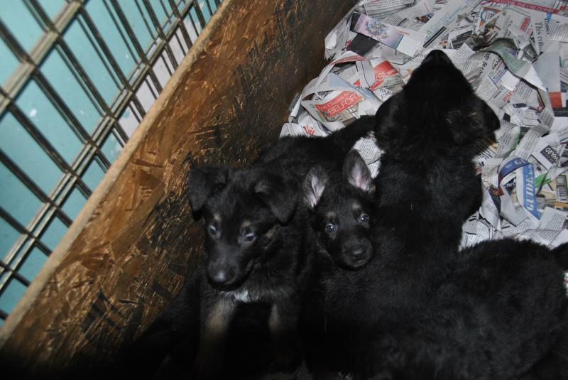 ears are coming up